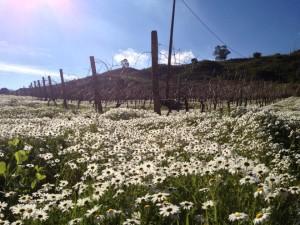 Primavera a Montoni